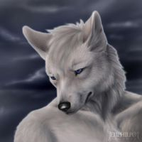 Commission: White Dingo by jocarra