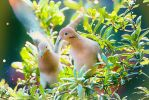 Doves by clippercarrillo