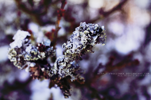 Magical lichen... by freezinka