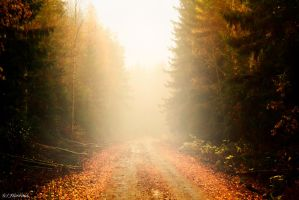 Scandinavian autumn 3 by Floreina-Photography