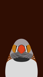 Zebra Finch  - bird wallpaper for iPhone by birnimal