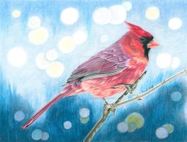 Red Cardinal - colored pencil drawing by kad-portraits