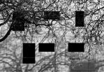 six rectangle in nature by exosquelette
