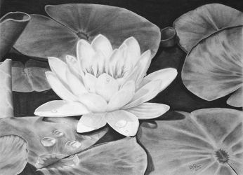 Water Lily by DJPrior