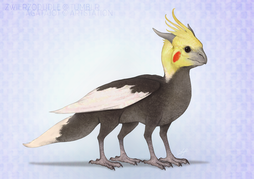 2017-05-19 cockatiel dragon by agata-j