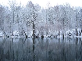 Winter Riverbank by Photopathica