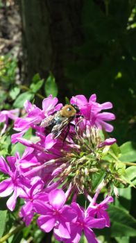 Busy Busy Bee by wildfire4u2