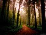 Magic Woods by P3droD