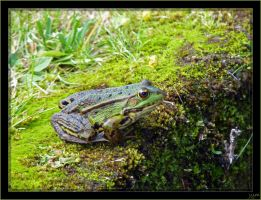 Frog by J-Y-M