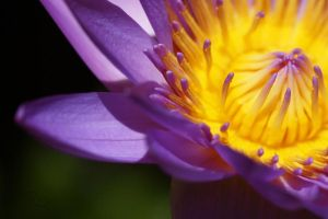 .:: Passion of Life ::. by uncivillyemily