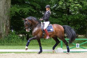 Lusitano Trot Dressage Training Stock slight blur by LuDa-Stock