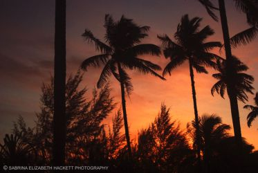 Coconut Tree Silhouettes by Hitomii