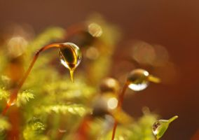 dewdrops on moss... by clochartist-photo
