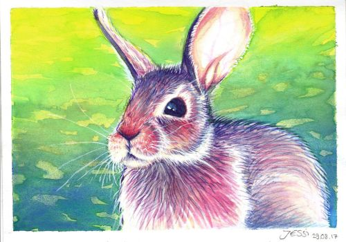 Colorful Rabbit   Animals and Nature by J-Ssi