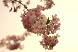 Spring Tree I by LoveForDetails