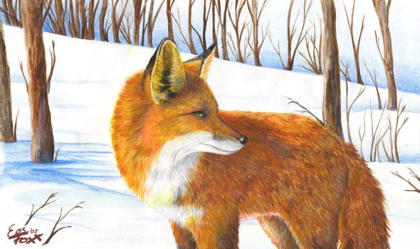 Fox in the snow - By EosFoxx by dafoxlove