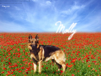 Molly by AdoxyDesigns