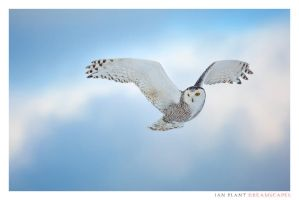Hovering by Ian-Plant