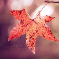Fall III by Alyphoto