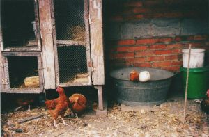 Chicken coop by LesEssences