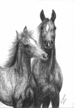 A mare with her colt by BrazowyWiewior