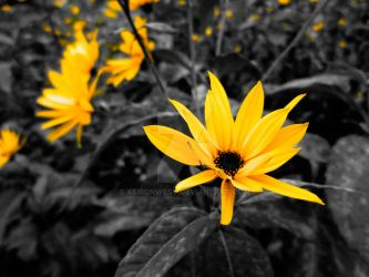 Yellow Flower Photography Print by KeironWest