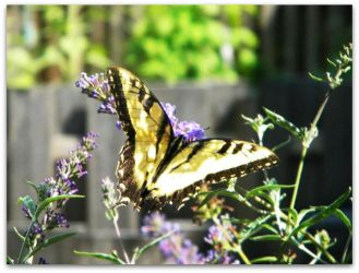 Butterfly In Spring by Sapphire2kG