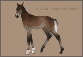 Traaker Import 43 |Closed by Pashiino