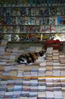 Bookstore Cat by StewartSteve