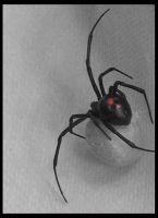 Along Came A Spider by NickyNightmare