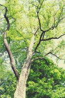 Branching Out by JohnnyNiffer