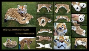 Life-Size Eurasian Lynx Plush Detail by TeeganPurrington