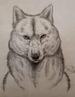 A more realistic wolf sketch by Aid-the-dragon