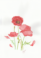 Red Poppy by getupp