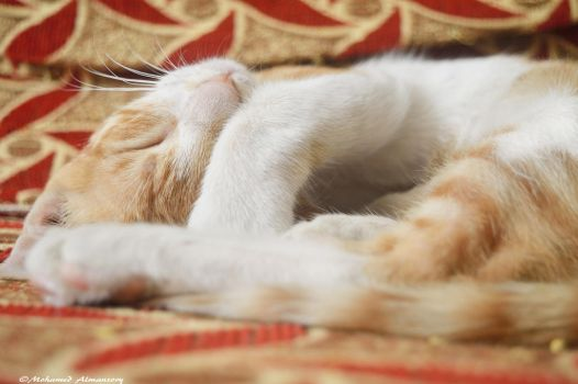 Do not disturb by MohamedAlmansory