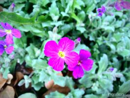 Spring Flower 2012 - 03 by Ingnition