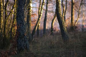 Forest Sunset by dalay-lamma