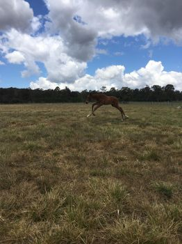 Foal Stock Galloping by Lucid-Dimensions
