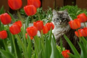 tip toe in the tulips by JasonKaiser
