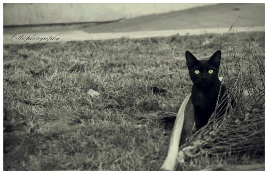 Black cat by OnlyCilla