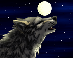 wolf by vicoon7