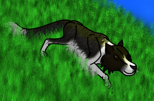 How I draw a Border Collie (request) Download by horse14t