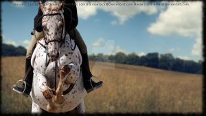 Appaloosa Jumper by MollyMay335