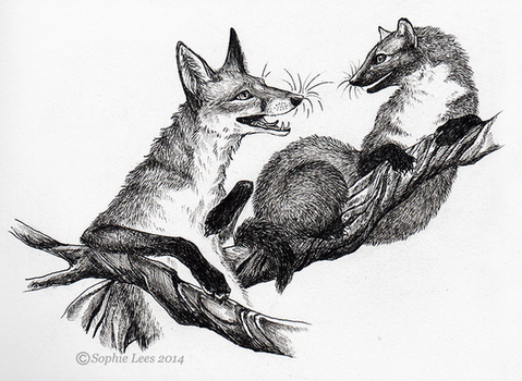 Inktober the 2nd - Fox and Pine marten by MO-ffie