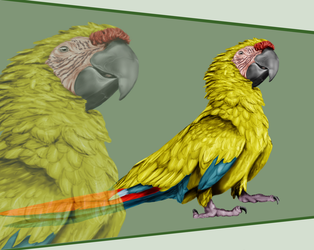 Great green macaw by SenterVeris