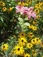 Lillies and Susans by edward-is-me