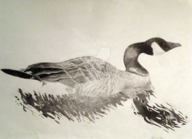 canada goose by Soul-Dead