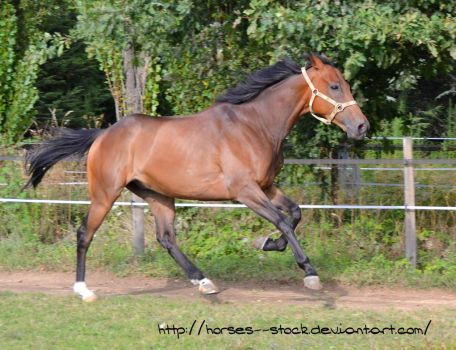 Justification - Stock 12 by Horses--Stock