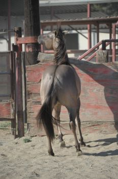 DWP FREE HORSE STOCK 277 by DancesWithPonies