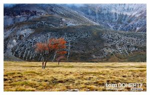 Lone Tree 2 by PicTd
